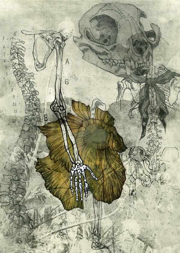 Anatomy poppy 1 by reminisense