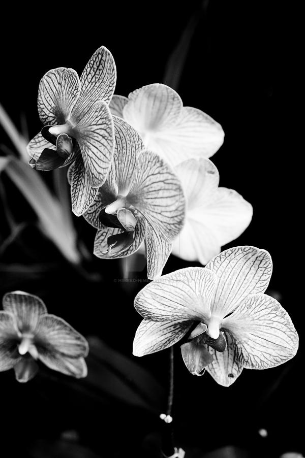 Black and White Orchid by Himeko-hime on DeviantArt