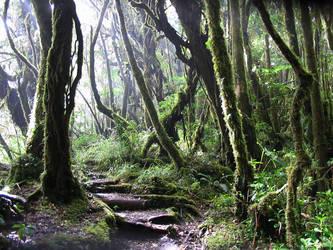 follow the path by thar-