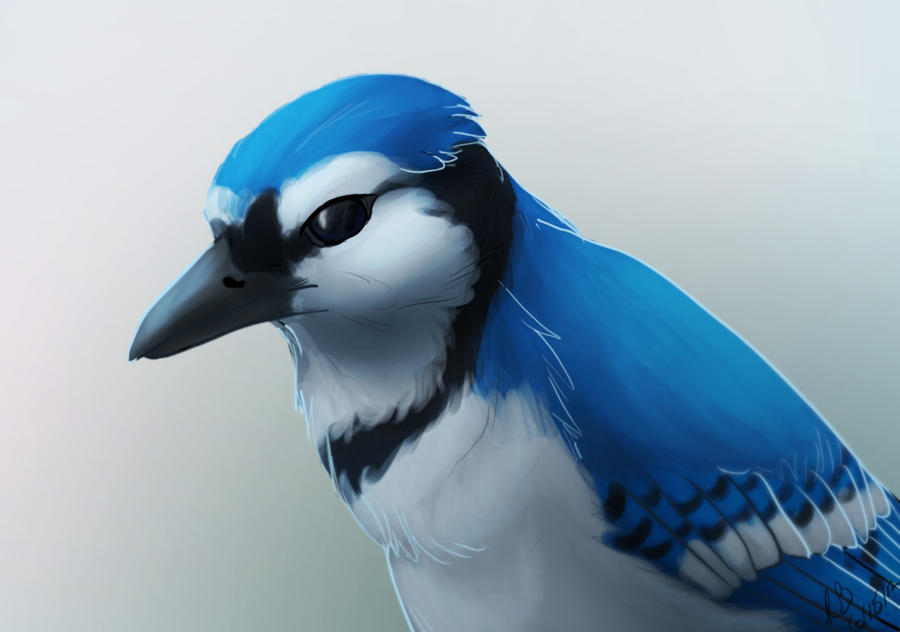 Blue Jay by Rae-elic
