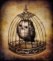 Owl by Anuk