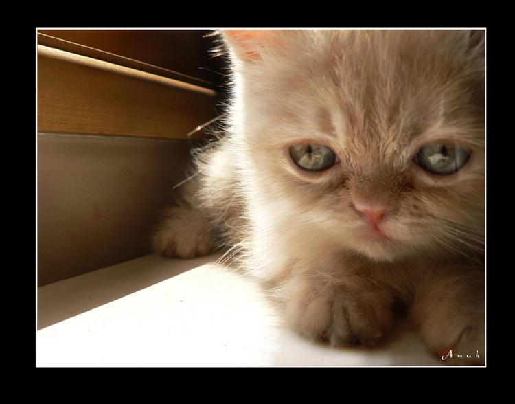 My Little Kitty by Anuk
