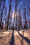 Cold Sunshine