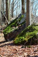Green Rocks by Elppin