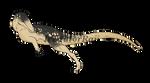 Dinovember Day 5: Australovenator by IrritatorRaji