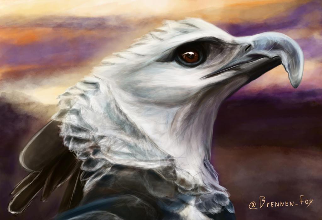 Harpy eagle by Brennen-Fox