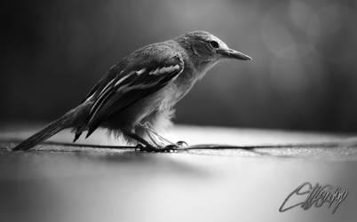 Bird by dimasprasetyo