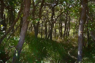 Roxborough Forest by SavageLandPictures