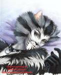 Here kitty kitty....