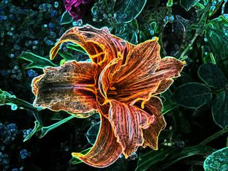 Summa flower.