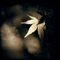 Mono-Maple by McKenzie-James