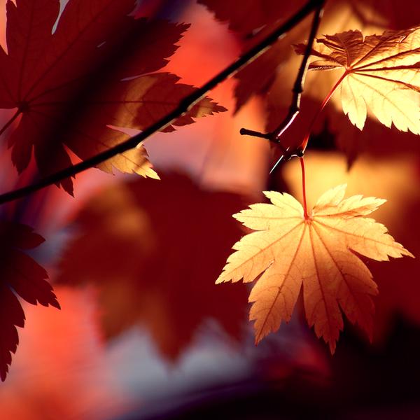 Autumn Shadows by McKenzie-James