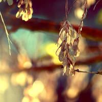 Winter Light by McKenzie-James