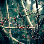 Dark Rain by McKenzie-James