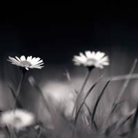 It's Quiet Down Here by McKenzie-James