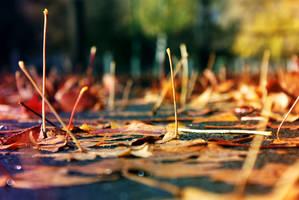 Autumn Rain by McKenzie-James