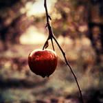 Candy Crunch by McKenzie-James