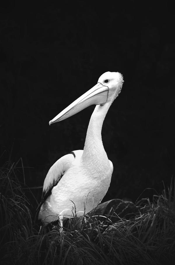Animals VII by McKenzie-James