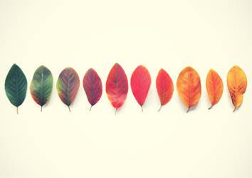 Autumn by McKenzie-James