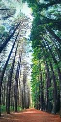 Treeburst by McKenzie-James