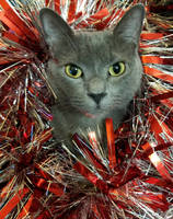Rebel the Christmas kitty by tabithamack