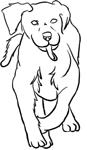 Running labrador by byakuyaWhiteNight