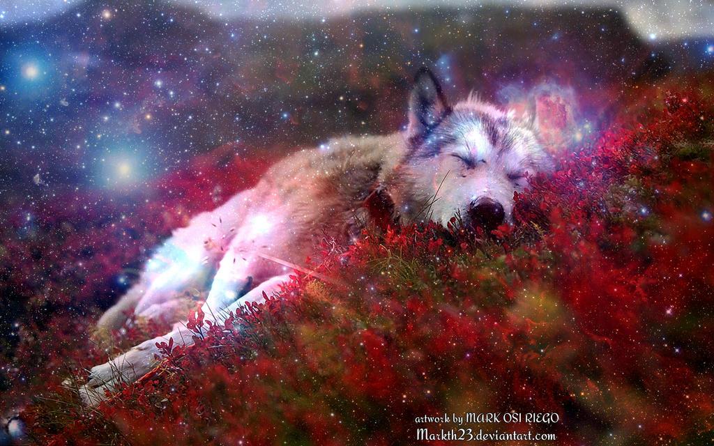 Galaxy Wolf Wallpaper By Markth23