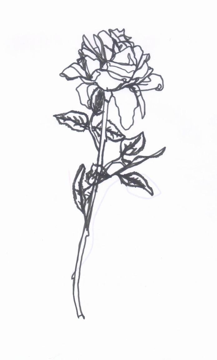 Contour Line Drawing Jobs : Rose contour drawing by sorsimmanis on deviantart