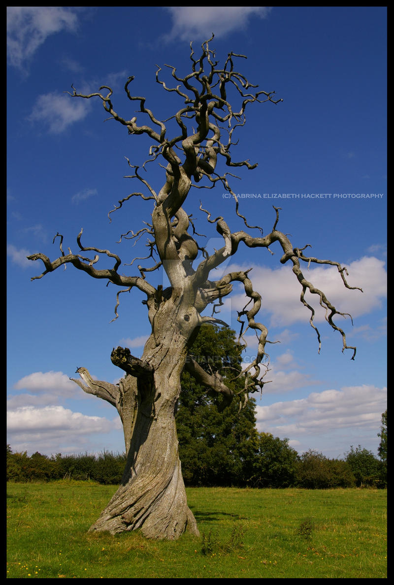 The Old Dead Tree by Hitomii