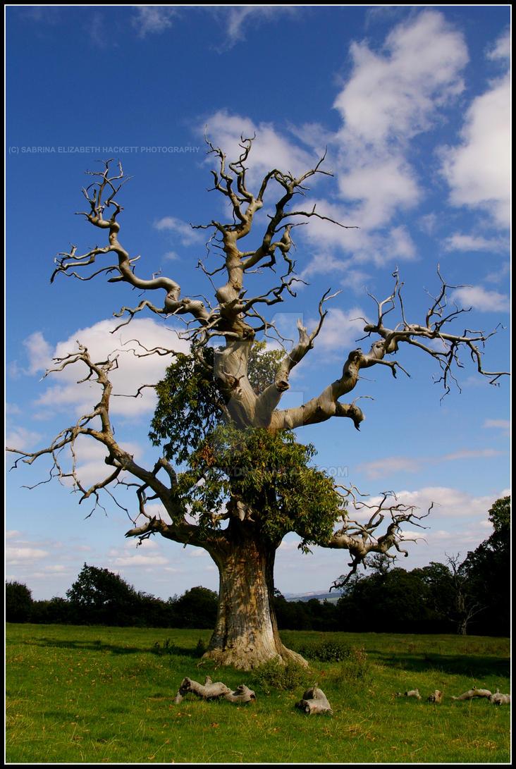 Half Dead Tree Tattoo Alive Half