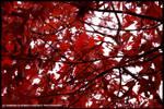 Autumn Colours by Hitomii
