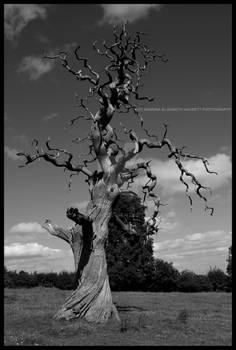 The Old Dying Tree