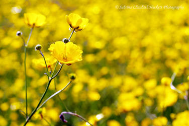 I Once Lay In A Field Of Gold by Hitomii