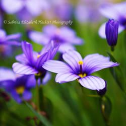 A Purple Memory by Hitomii