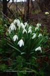 Snow Ends Spring Begins