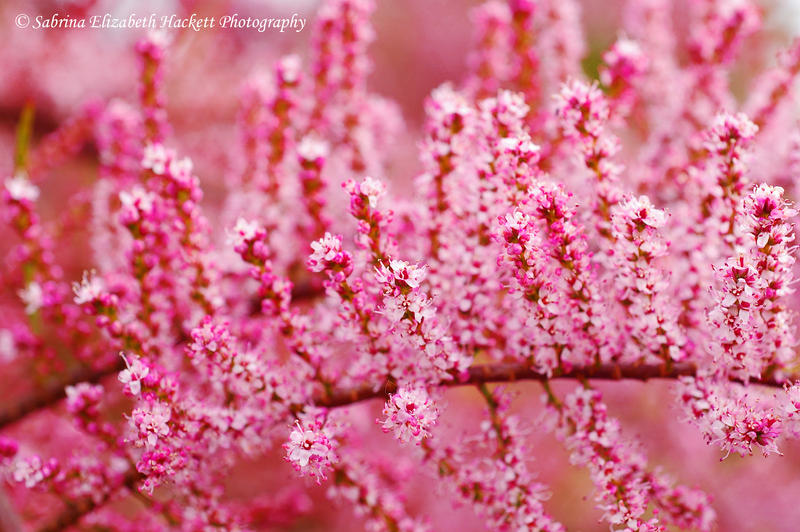 Pink Tree Like Perfection by Hitomii