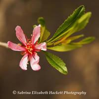 Littlest Blossom