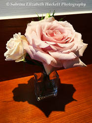 Roses From Last Summer