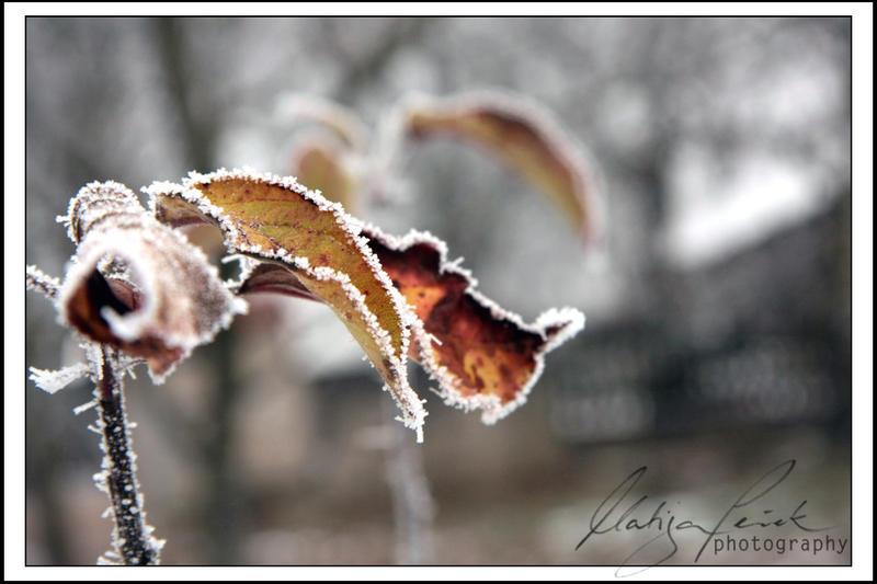 Winter by 6v4MP1r36