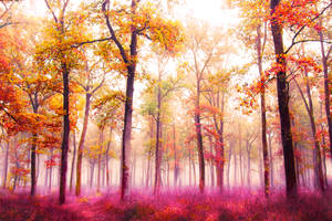 Forest in the Fog 3