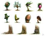 Plants and Fungus