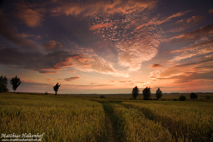 In the Field by MatthiasHaltenhof