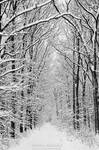 Winter in the forest 2