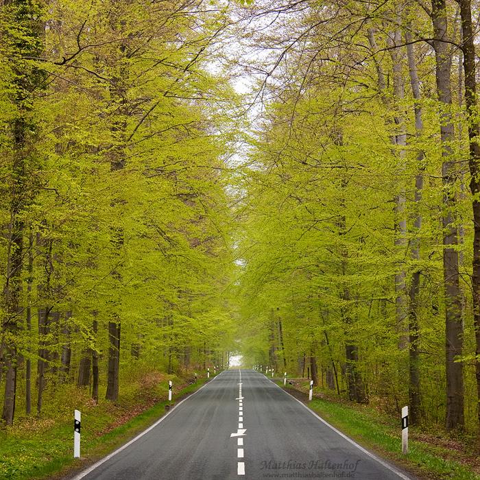 Spring Avenue by MatthiasHaltenhof