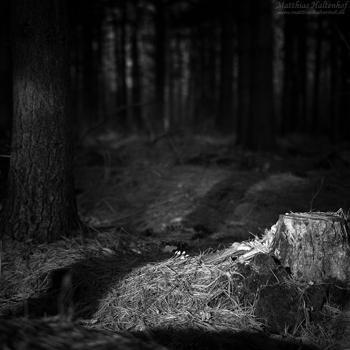 Forest Darkness 01 by MatthiasHaltenhof