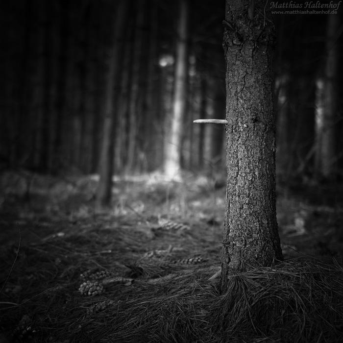 Forest Darkness 03 by MatthiasHaltenhof