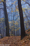 Bodetal Autumn 32