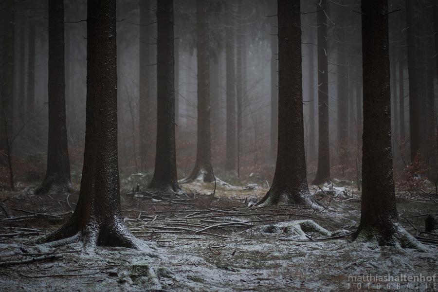 Frauenwald 3 by MatthiasHaltenhof