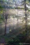 Sonnenstrahlen Heide