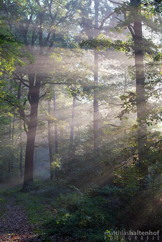 Sonnenstrahlen Heide by MatthiasHaltenhof